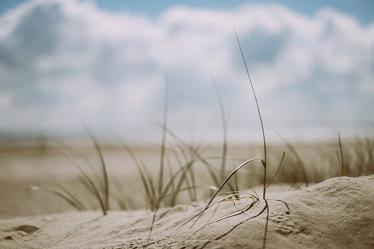 пляж, трава, на відкритому повітрі, пісок, море, берег моря