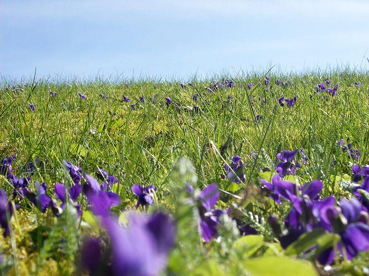 flower meadow, meadow, flowers, spring meadow, spring, beautiful, pretty
