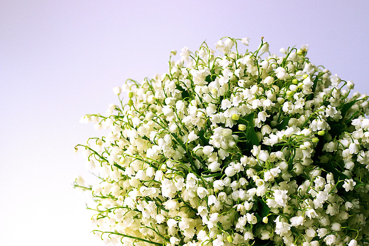 lily of the valley, white flowers, spring, lily-of-the-valley, blossom, bouquet, scented