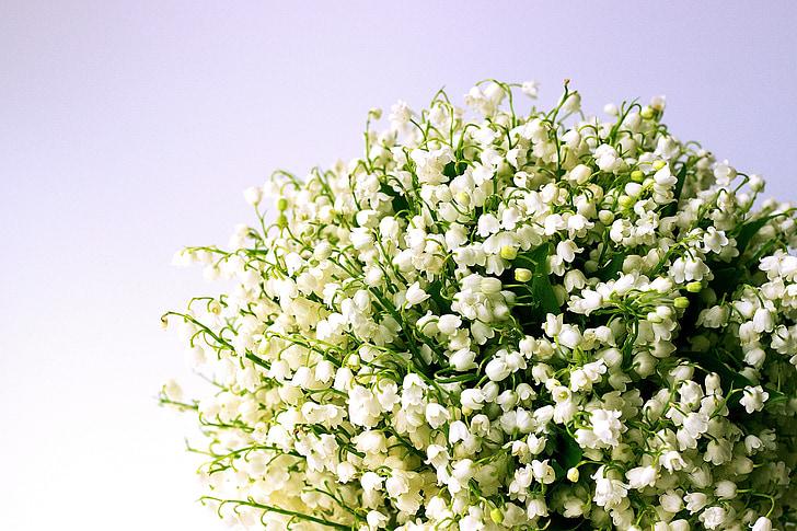 Paprastoji pakalnutė, baltos gėlės, pavasarį, Lily-apie-į-valley, žiedų, puokštė, kvapus