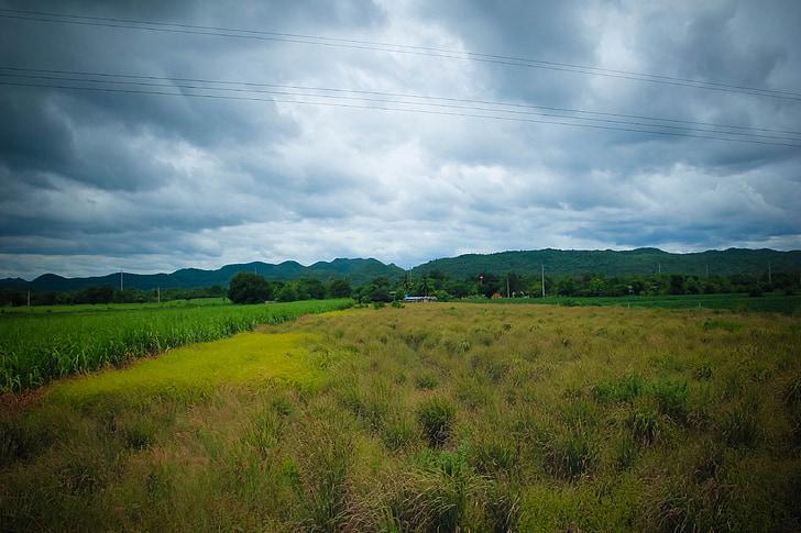 đào tạo, Kanchanaburi, Mead, Pa, Mount, cây, gạo