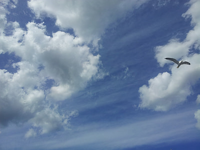 himmel, cloud, bird, sky