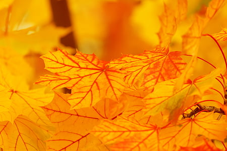 Περίληψη, το φθινόπωρο, φόντο, φωτεινή, χρώμα, πτώση, φύλλο