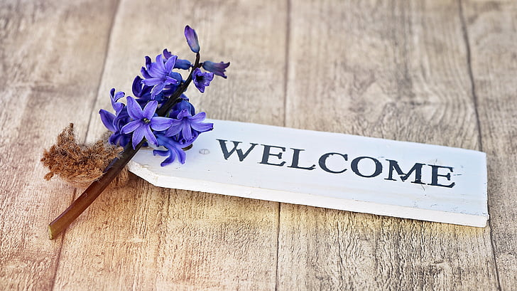 eceng gondok, bunga, tanaman, bunga, biru, wangi bunga, wangi