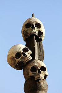 human, skulls, skeleton, head, death, horror, halloween