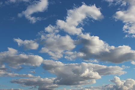 niebo, ptaki, Dom, fleght, chmury, stado