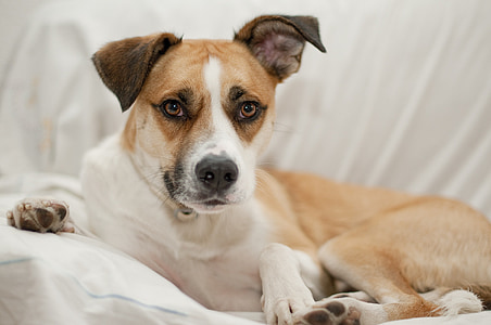 dog, domestic, cute dog, animal, young, canine, pet