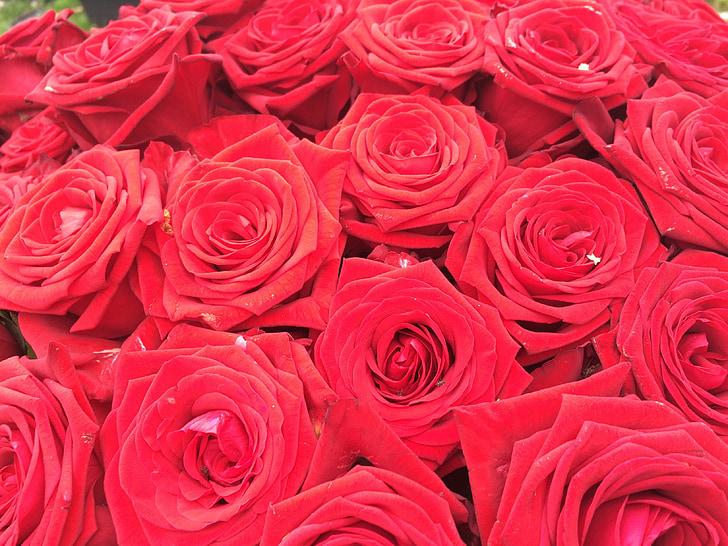 rosas rojas, ramo de la, ramo de rosas