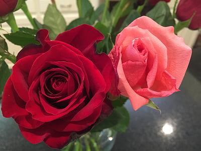 玫瑰, 红色和粉红色的玫瑰, 花