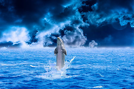 delfin, havet, vand, dyr, fisk, svømning, blå