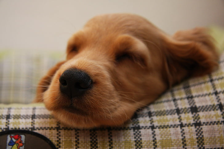 dog, puppy, pet, dogs, animals, pets, cute