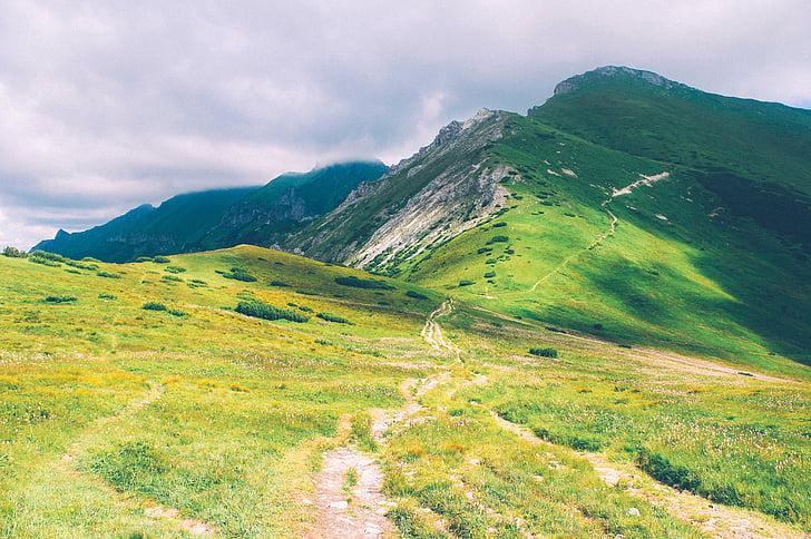 pista de caminhada, caminhar o caminho, trilha, caminho, caminho, natureza, montanhas