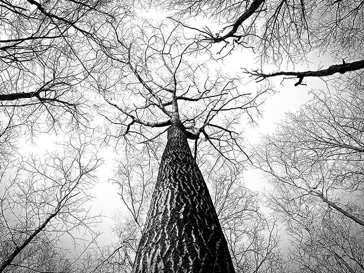 cabang, pohon, ranting, kulit, tinggi, tinggi, pohon