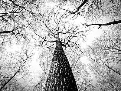 branques, arbre, branques, escorça, alta, d'alçada, arbres