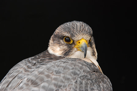 bird, beak, eye, nature, bird of Prey, animal, hawk - Bird