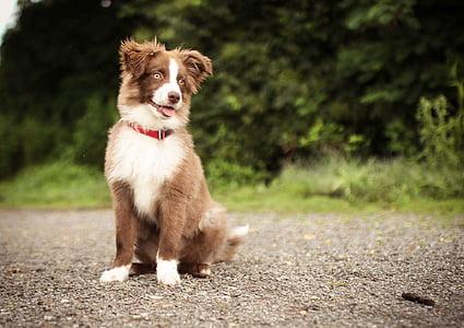 куче, Красив, домашен любимец, домашни любимци, едно животно, домашни животни, животните теми