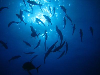 море, океан, вода, светлина, риба, подводни, живот в морето
