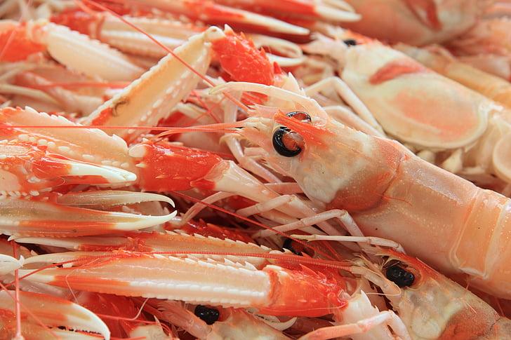 Itàlia, Sardenya, l'Alguer, marisc, gambes, Port, mercat
