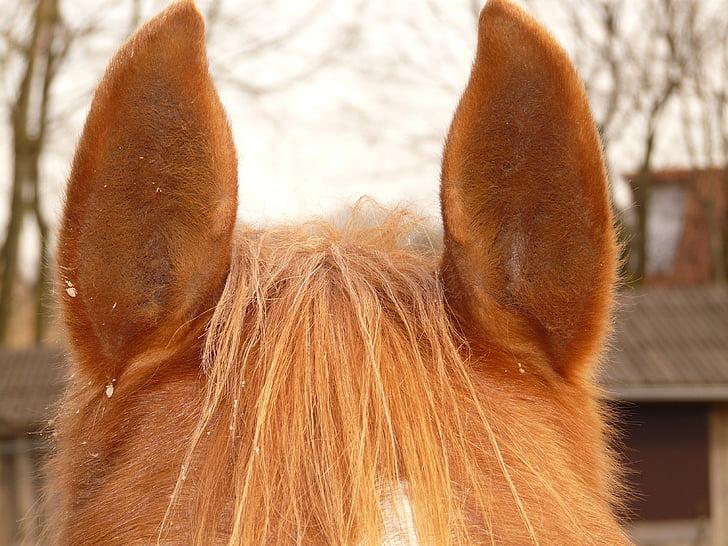 Slike velikih magarca