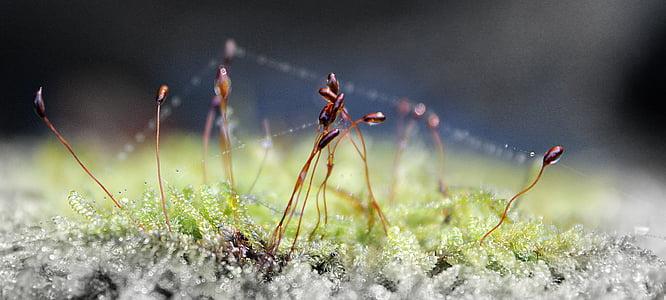 makro, Rosy, kvapky, Zelená, tráva, Príroda, dewdrop