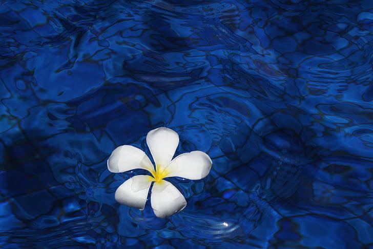 квітка, води, Весна, завод, Живці квітів, квіти, Балі
