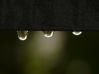 DROPP, regndroppe, vatten, våt, ytspänning, regn, släpp