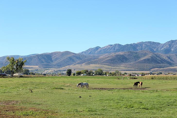Meadow, cảnh quan, cỏ, đồng cỏ, Trang trại, ngoài trời, Thiên nhiên