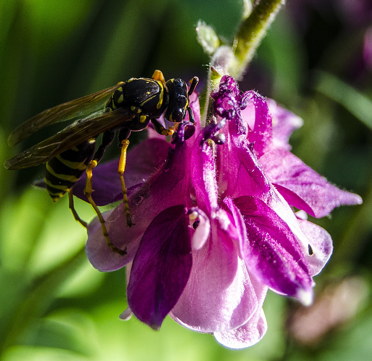macro, abella, flor, verd, planta de Turquia, natura, vida