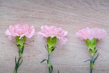 claus d'espècia, Rosa, Clavell Rosa, flors, tres, flors roses, peça