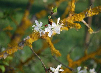branch, flower, blossom, wild flower, blooming, pure, springtime