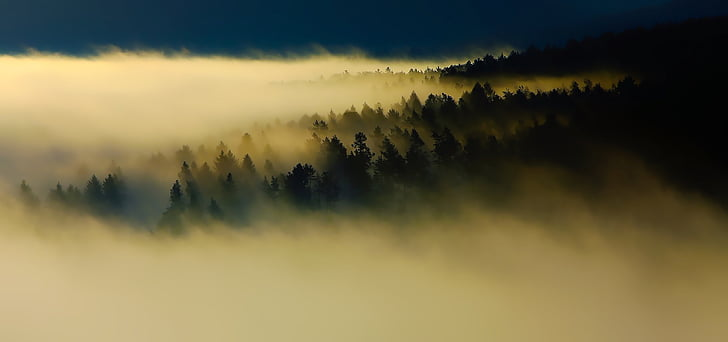 sunrise, dawn, fog, thick, mountains, forest, trees