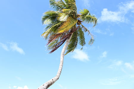 maldives, palm, sky, clouds, palm leaves, summer, holiday