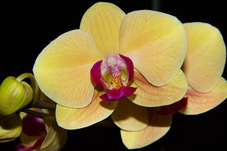https://i0.hippopx.com/photos/757/942/350/orchidea-yellow-flower-flowers-preview.jpg