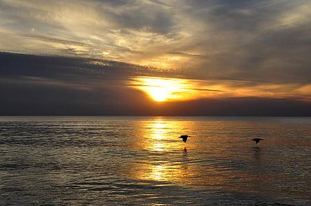 sunset, florida, gold, sea, afterglow, sky, romantic