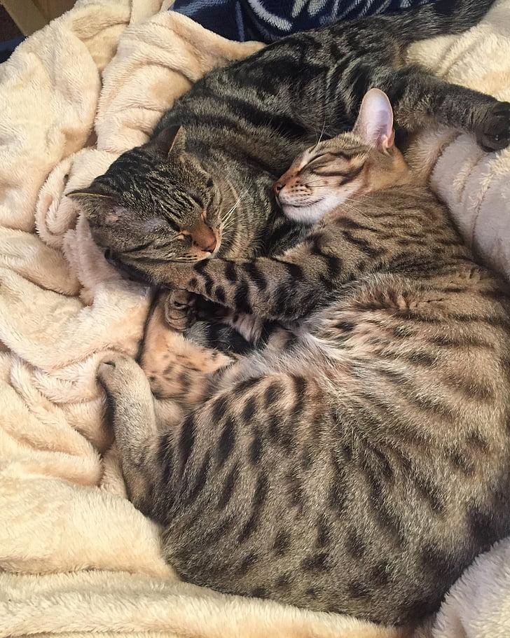 cat, kitten, kitty, take a nap, good, good friends