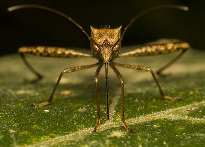 mosquit, error, natura, insecte, macro