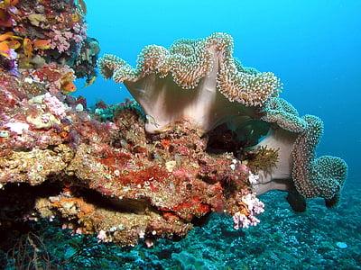 Maldīvija, ceļojums, krāsa, zemūdens, koraļļus, krāsas, ceļojumi