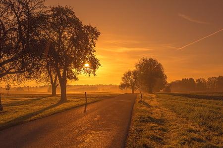 natursköna, Road, soluppgång, solnedgång, träd, äng, Dessutom
