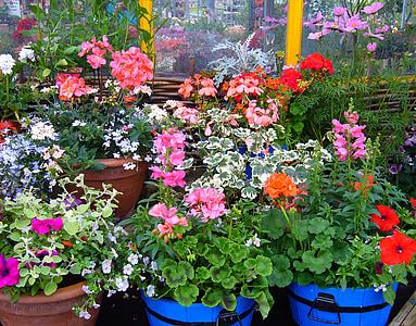 flowering pot plants, plant display, pot, plants, summer, garden plants