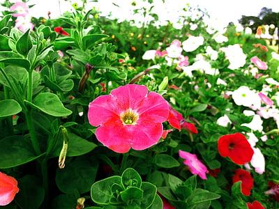 Unduh 520+ Wallpaper Bunga Di Taman Gratis Terbaik