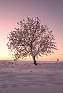 strom, sníh, Příroda, Zimní, chlad, Zimní krajina, Západ slunce