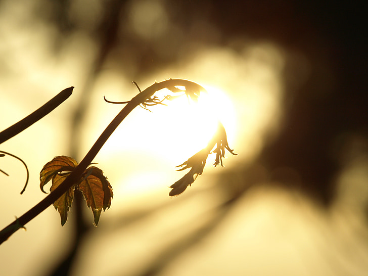 nature, summer, the sun, west, grass, gold, tree