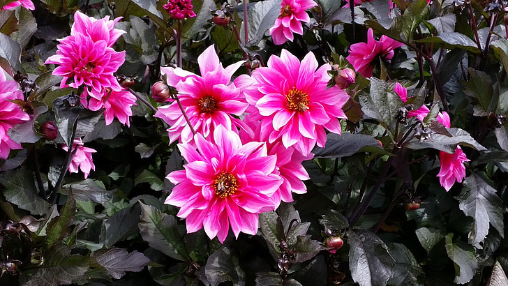 Rosa, flors, Rosa blanca, natura