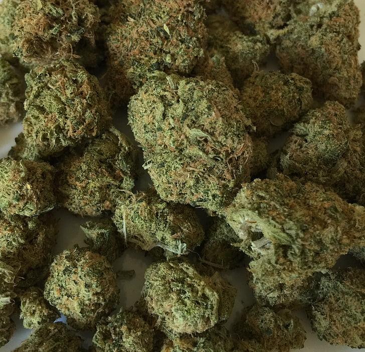 canábis, maconha, erva daninha, Droga, cânhamo, medicina, planta