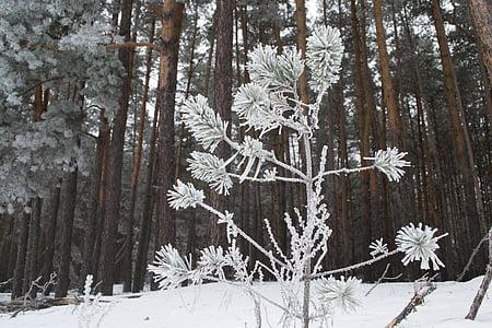winter, nature, landscape, snow, trees, cold, snow winter nature