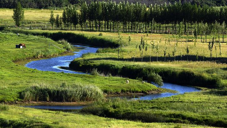 lombard, lake, prairie