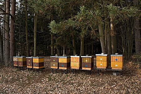 colomar, bosc, cria de les abelles de mel, arbres, la vora del bosc