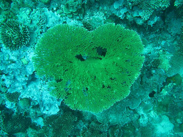 coral, maldives, sea, sea bed, heart