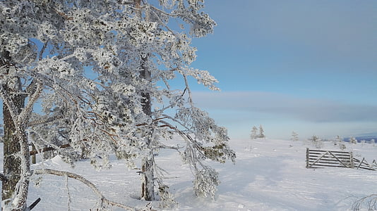 winter, levi, lapland, snow, cold, frost, snowy