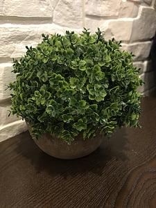 potted plants, plant, decoration